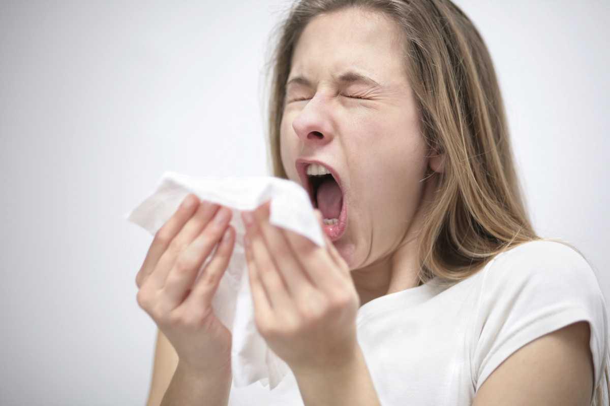 nys høfeber allergi