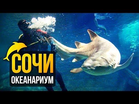 Океанариум Сочи — Sochi Discovery World Aquarium. Путешествуем по Сочи!