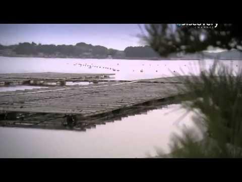 Драгоценный камень жемчуг: история, виды (речной и морской), ювелирная обработка (+фото)