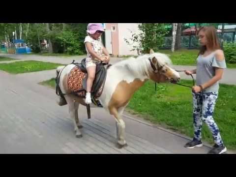 Гуляем в Новосибирске, парк березовая роща. Аттракционы, катание на пони, контактный зоопарк