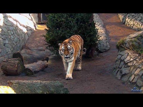 Ленинградский зоопарк. В мире животных (2017)