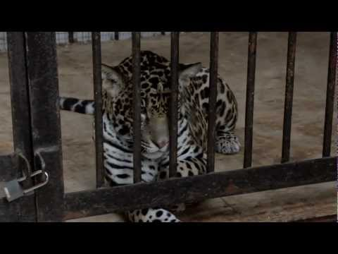 Самарский зоопарк (HD)