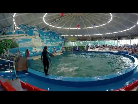 "Дельфинарий «Атлантида» в Нижнем Новгороде .(""Atlantis"" in Nizhny Novgorod .)"