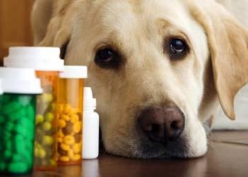 Какие витамины давать собаке