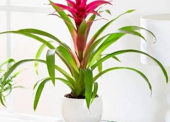 Инструкция по пересадке комнатного цветка