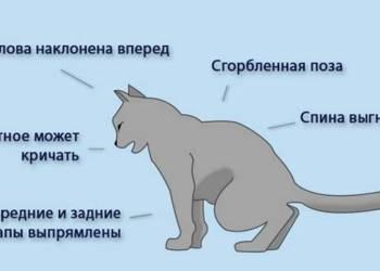 Мочекаменная болезнь котов: что важно знать владельцу