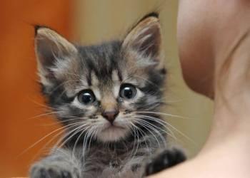 Что делать, если подобрали котенка на улице?