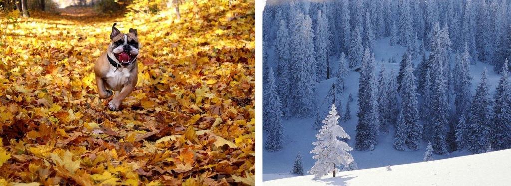 Великолепные пейзажи зимы и осени