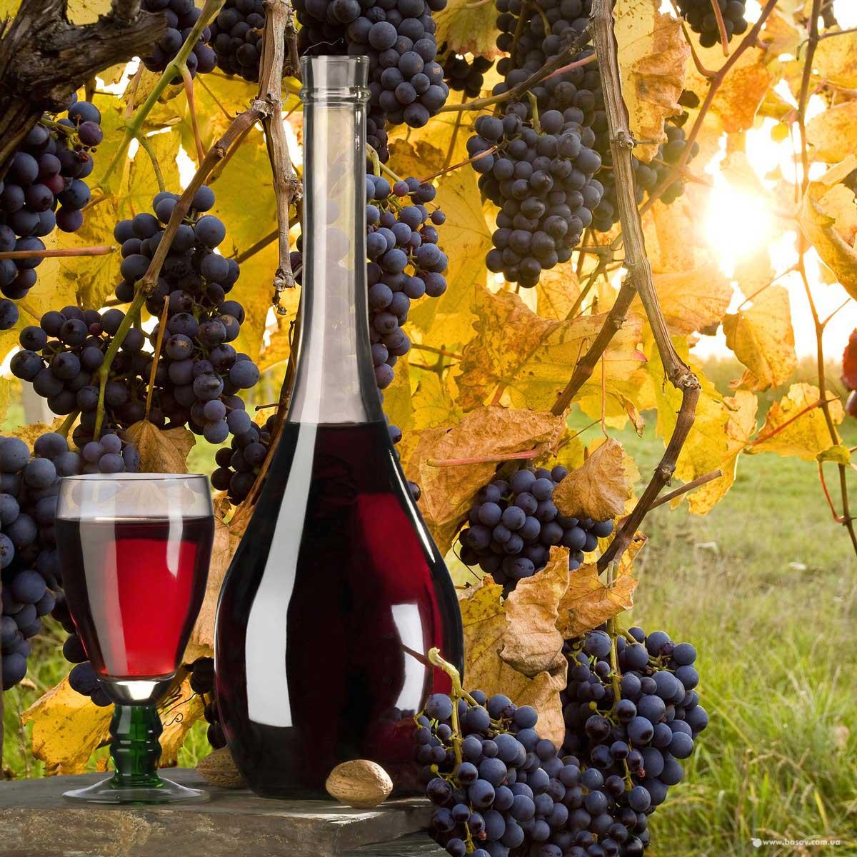 krasnoe-vino-poleznii