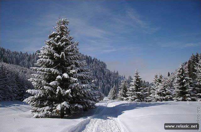 winter_054