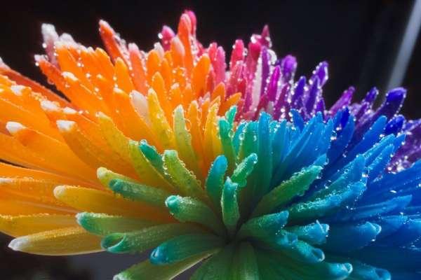 cvety-raduga