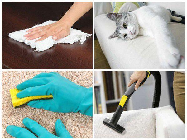 Как очистить шерсть животного с мебели