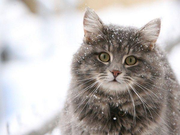 Какую кошку завести