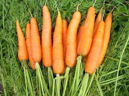 Как хранить морковь