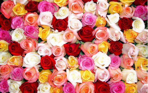 Купить розы на сайте belrose.ru