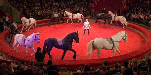 10 мест, куда пойти с детьми в Санкт-Петербурге: Санкт-Петербургский государственный цирк.