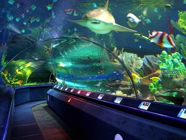 10 мест, куда нужно сходить с детьми в Санкт-Петербурге: Океанариум «Планета Нептун»