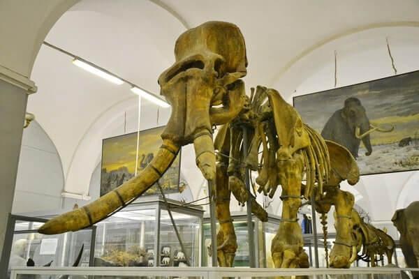 10 мест, куда нужно сходить с детьми в Санкт-Петербурге: Зоологический музей
