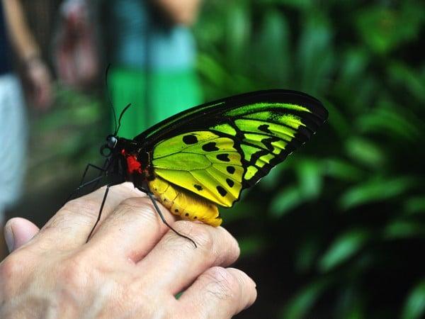 Куда сходить с ребенком в Екатеринбурге: Парк бабочек