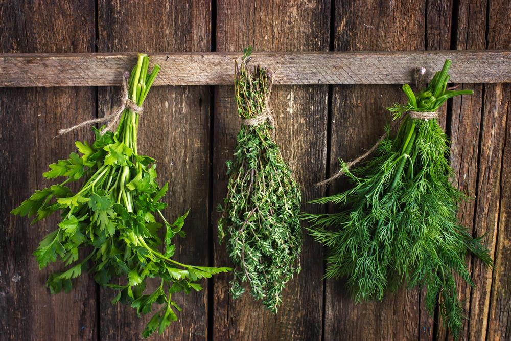 Заготовка зелени на зиму: сушка