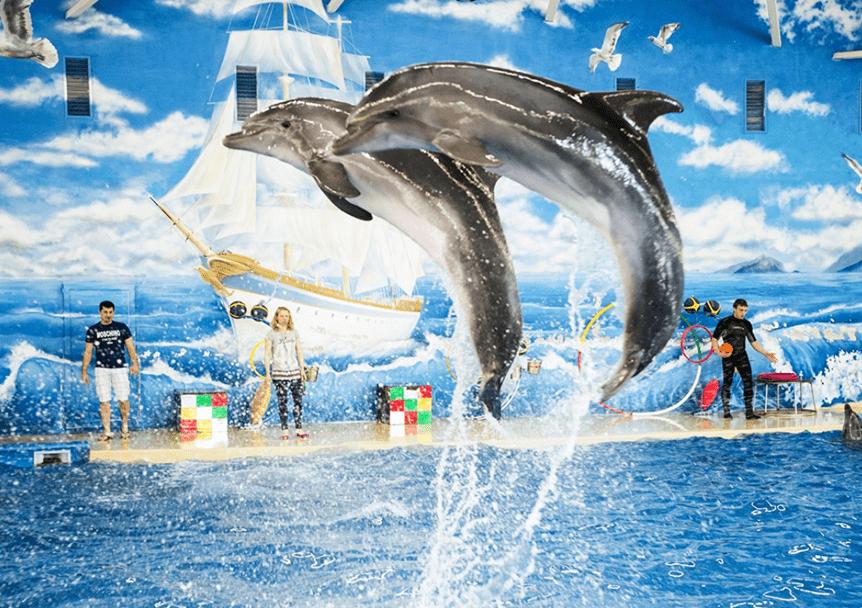 Дельфинарий «Атлантида»